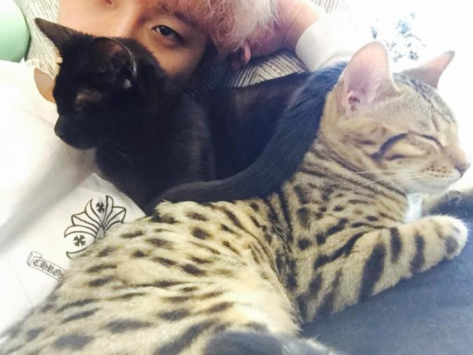 Junho Cats